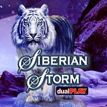 Siberian-Storm-Dual-Play